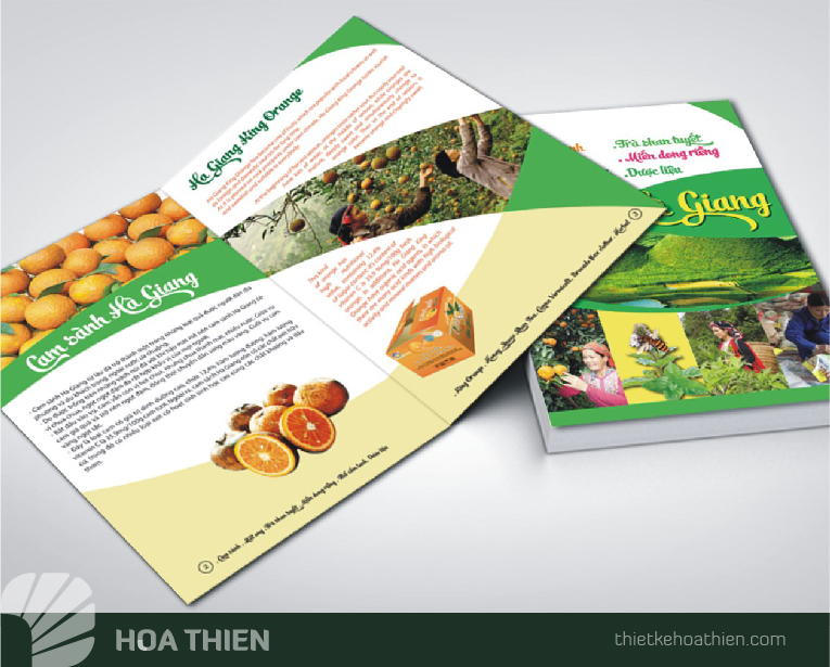 Thiet ke Catalogue dep Hoa Thien
